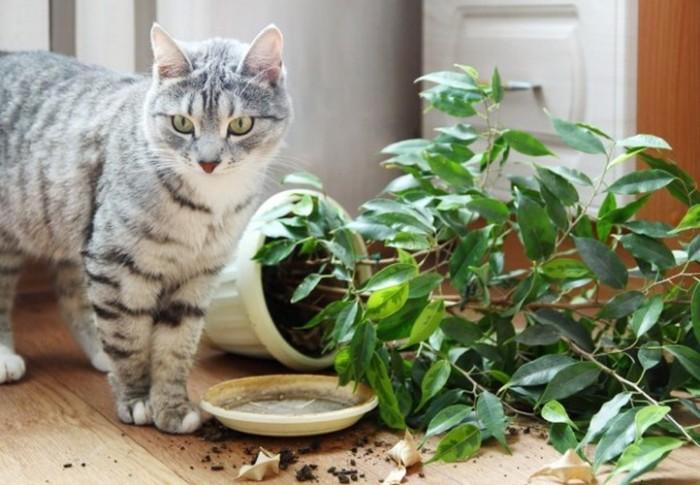 Почему гибнут растения? . - Основы ухода - Как ухаживать - Каталог статей - Маленький Мир Тропических растений